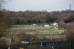 Harefield, UK. 7 February, 2020. Saplings planted by HS2 alongside Harvil Road as a mitigation measure for the destruction of ancient woodland nearby. Many of the young trees are already dead.