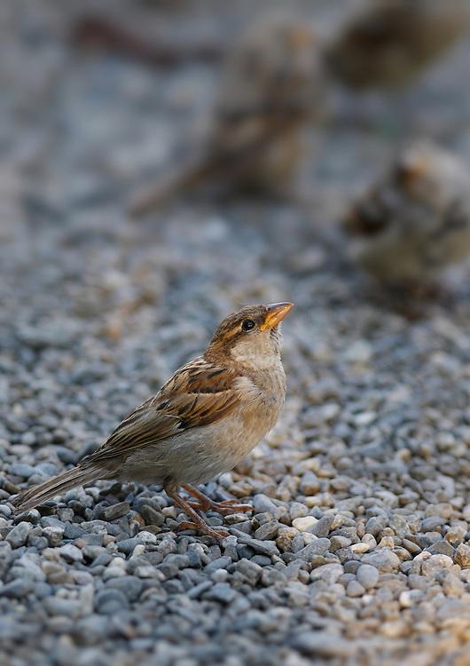 Switzerland - Birds in Interlaken city centre