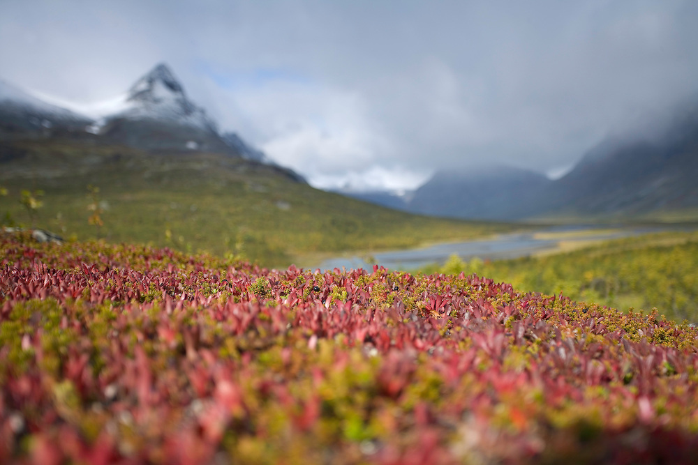 Rapadalen with autumnal boreal vegetation in foreground, Sarek National Park, Laponia World Heritage Site, Sweden