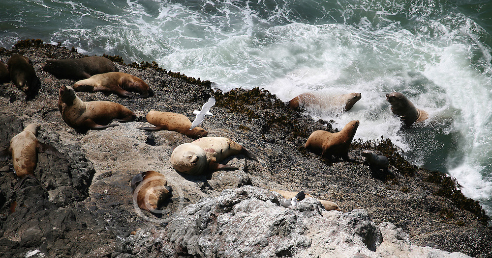 Sea lions enjoying the weather.
