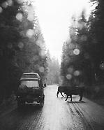 Montana 2016 Road Trip - Van camping, vanlife, fly fishing