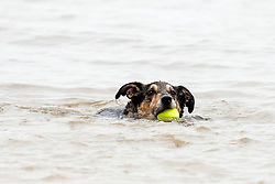 Wallace looking a little out of his depth  Hornsea dog friendly beach<br /> <br />  03 August 2018<br />  Copyright Paul David Drabble<br />  www.pauldaviddrabble.co.uk