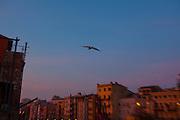 Seagull over the River Onyar at dawn, Girona.