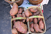 Locally produced sweet potatoes on display at the Farmers Market along Main Street in downtown Greenville, South Carolina.