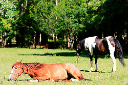 Rebanho de cavalos na fazenda Santa Helena, em Encruzilhada do Sul. FOTO: Jefferson Bernardes / Preview.com