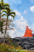 lava from Kilauea Volcano erupts from a fissure on Pohoiki Road, close to palms and ferns growing just outside of the Puna Geothermal Ventures power plant, near Pahoa, Puna District, Hawaii Island ( the Big Island ), Hawaii, U.S.A.