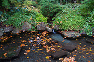 A small waterfall and fallen fall leaves in a pond at the Air Force Garden of Remembrance - Stanley Park in Vancouver, British Columbia, Canada