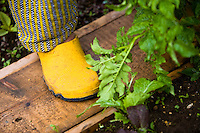 lady gardener with waterproof yellow shoes