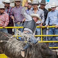 Alfonso Frances makes a 78-point bull ride during the Navajo Nation Fair Rodeo Saturday in Window Rock.