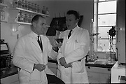 04/03/1964<br /> 03/04/1964<br /> 04 March 1964<br /> Smith Kline and French Laboratories personnel at Smith Kline and French Laboratories Ltd, Ashgrove, Dun Laoghaire Co. Dublin. Picture shows Mr. J.V. O'Loughlin and Mr. E.O. Mulcahy in the lab.