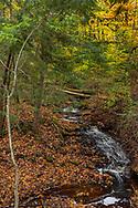 Leaf strewn creek at Laughing Whitefish State Park, Michigan, USA