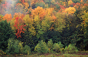 PA Landscapes, Autumn Color, Allegheny National Forest, NW PA