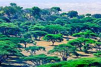 View of the Serengeti Plains from Nabi Hill, Serengeti National Park, Tanzania
