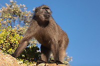 https://Duncan.co/baboon-at-cape-point
