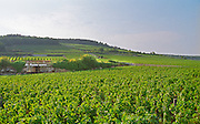 The Les Bonnes Mares Grand Cru vineyard, with sign, in Chambolle Musigny, Bourgogne