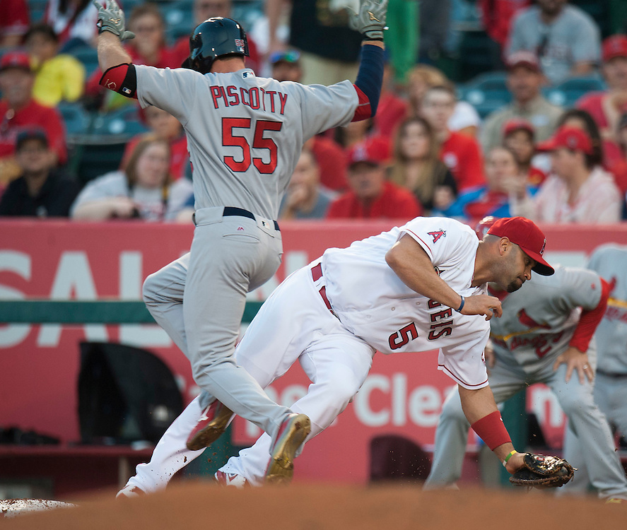 The Angels' Albert Pujols gets the out as first on the Cardinals' Stephen Piscotty Wednesday night at Angel Stadium.<br /> <br /> ///ADDITIONAL INFO:   <br /> <br /> angels.0512.kjs  ---  Photo by KEVIN SULLIVAN / Orange County Register  --  5/11/16<br /> <br /> The Los Angeles Angels take on the St. Louis Cardinals at Angel Stadium Wednesday.<br /> <br />  5/11/16
