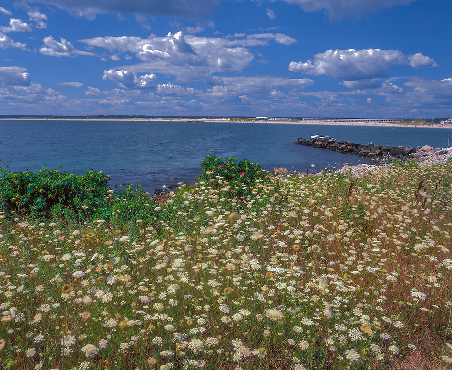 Watch Hill Beach, summer, Napatree Point, Queen Anne's Lace, Watch Hill, RI