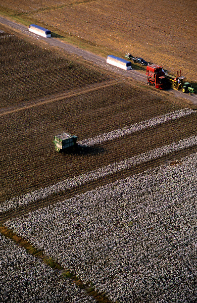 Stock photo of the aerial view of machinery working in the field harvesting cotton