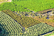 Aerial view of plantations in agricultural land. Photographed in the Sharon District, Israel