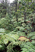 Hawaii Volcanoes National Park rainforest