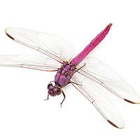 Odonata - Dragonflies and Damselflies
