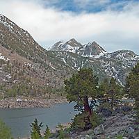 Incense Cedar trees <br /> (Calocedrus decurrens) grow beside Lake Sabrina in the Eastern Sierra Nevada, near Bishop, California.