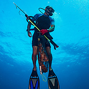 Commercial fisherman Andres Maldonado rises to the surface with a bag of lobsters and fish after a dive off Cabo Rojo, Puerto Rico. He noticed drastic and obvious declines in fish numbers and habitat availbale after Hurricane Maria in 2017 which put many other commercial fisherman out of business. Image release available.