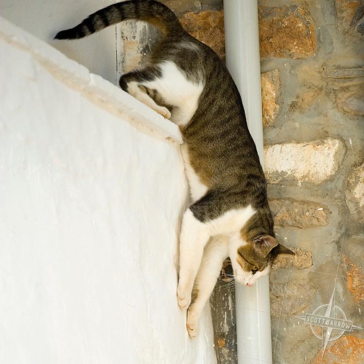 Cat climbing down off a ledge on Hydra, Greece.