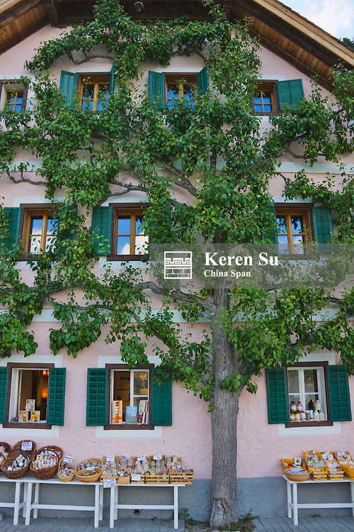 House wall overed by a tree, on the shores of Hallstatter Lake, Hallstatt, Austria