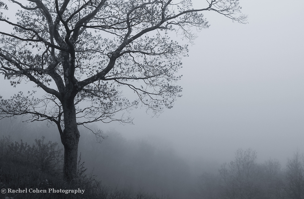 """""""Afternoon Fog"""" mono<br /> <br /> Lovely afternoon fog in the Blue Ridge Mountains of Virginia!!<br /> <br /> All About Fog by Rachel Cohen"""