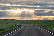 Sunrise image of a country road through the wheatfields in the Palouse near Steptoe, eastern Washington, Pacific Northwest by Randy Wells