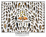 CAUGHT BY CATS PRINTS