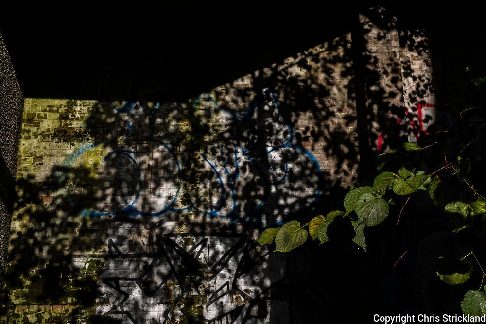 Edinburgh, Lothian, Scotland, UK. 24th September 2021. Graffiti and leaves in autumn light and shadows.