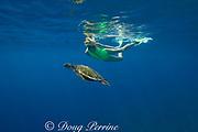snorkeler with green sea turtle or honu ( Chelonia mydas ) Kealekekua Bay, Kona, Hawaii Island ( the Big Island ) Hawaiian Islands, USA ( Central Pacific Ocean ) MR 354