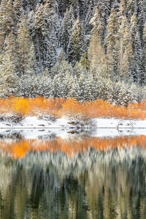 """""""Snowy Coldstream Pond 6"""" - Photograph of yellow foliage and snow at Coldstream Pond, also known as Donner Pond, shot in the fall in Truckee, California."""