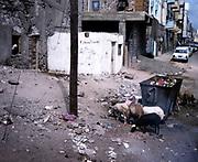 City of Aden, Yemen, 1998 sheep browsing rubbish on street