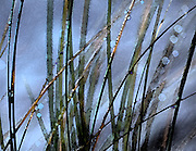 Blades of grass in a storm