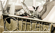 Australian Cattle Dog sitting in a Jeep with Outlaw spelled out in barbed wire on the side door, waiting in a parking lot in Polson, Montana.