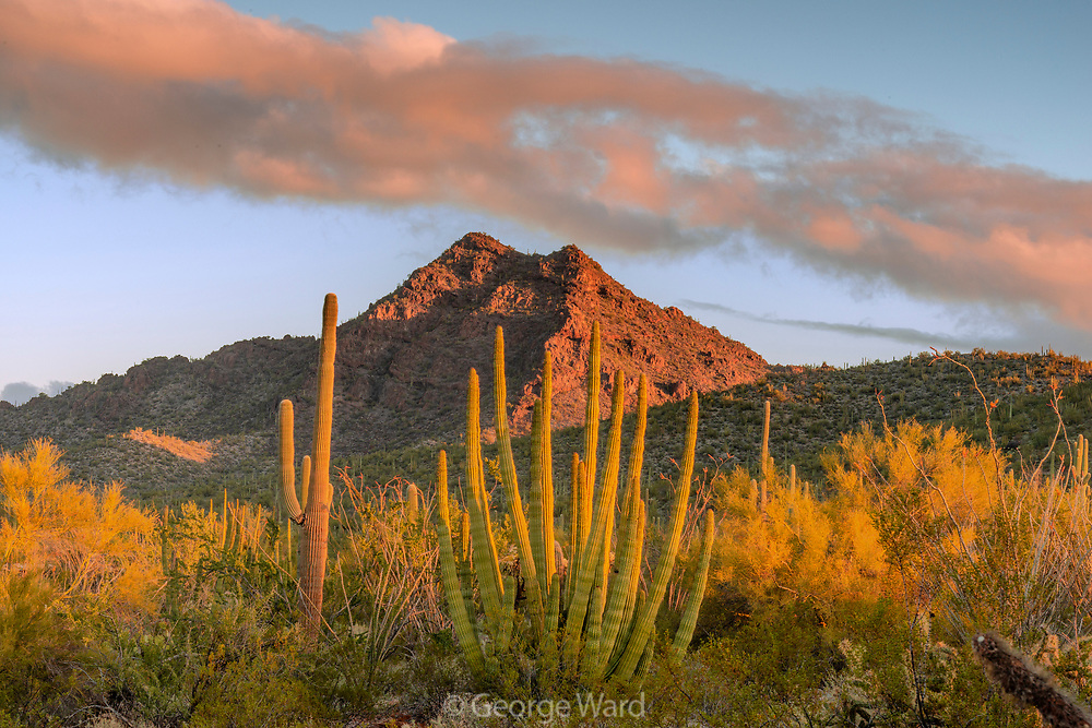 Twin Peaks with Organ Pipe Cactus, Palo Verde, and Cloud, Organ Pipe Cactus National Monument, Pima County, Arizona