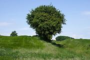 tree group near a wheat field