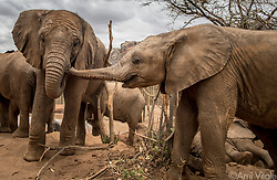 Bawa puts his trunk in Sosian's mouth. It's a gesture that is reassuring and comforting, like a hug or a handshake for humans. Both elephants are residents of the Reteti Elephant Sanctuary (@r.e.s.c.u.e).  <br /> <br /> Reteti Elephant Sanctuary, in northern Kenya is the first ever community-owned and run elephant sanctuary in Africa. The sanctuary provides a safe place for injured elephants to heal and later, be returned back to the wild.  You can support this incredible place and the people who protect wildlife. Make a $10 contribution in support of Reteti for a chance to win a trip to Kenya, see Dave Matthews in concert and take home Dave's guitar with @prizeo (Link in profile). Not only will you be helping care for orphaned baby elephants and strengthening community ties, you'll also have a chance to win a life-changing trip to see the sanctuary in person. The first $10,000 in funds raised will be generously matched by Elephant Gems (@elephantgems).<br /> <br /> Reteti operates in partnership with Conservation International (@conservationorg) who provide critical operational support and work to scale the Reteti community-centered model to create lasting impacts worldwide. <br /> <br /> Photo by @amivitale.