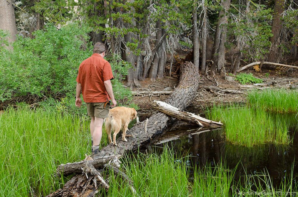 Hiker and dog (golden retriever) crossing a pond on a log, Sierra Nevada, Toiyabe National Forest, California