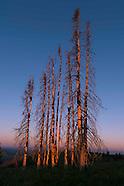 Oregon Project Dayshoot30