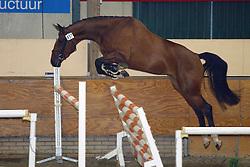 437-Usilithya<br /> KWPN Paardendagen Ermelo 2004<br /> Photo © Hippo Foto