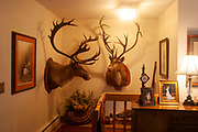 Hunter Byron Grubbs home is full of the guns, trophies, stuffed animals and hunting paraphernalia of an experienced hunter, near Minot, North Dakota, United States. Here, the entrance to his family home shows off two proud elk with fine full racks which he hunted and shot.