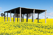 equipment shelter in a field of flowering canola crop under blue sky and cumulus cloud at Woodstock, New South Wales, Australia. <br />
