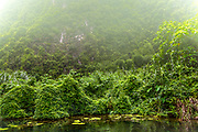 Foliage and mist during the boat adventure through the caves at Trang An. RAW to Jpg
