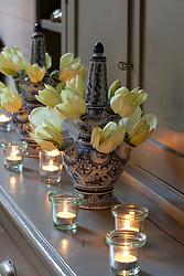 Tulip vase with Tulipa purissima