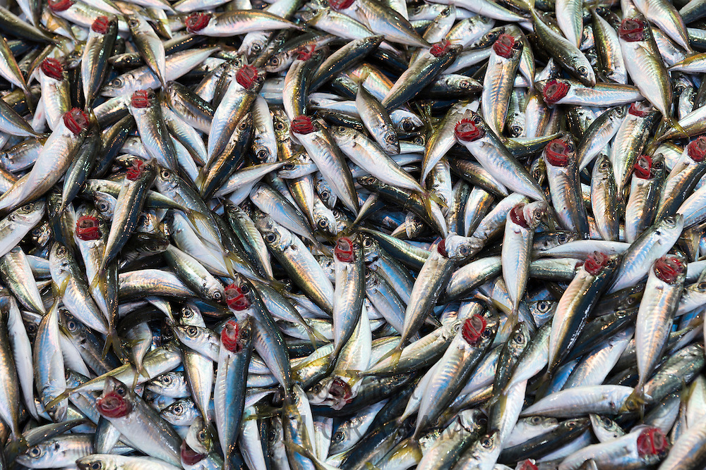 Fresh Mackerel fish - Istavrit - on display for sale on stall at food market in Kadikoy district, Asian side of Istanbul, East Turkey