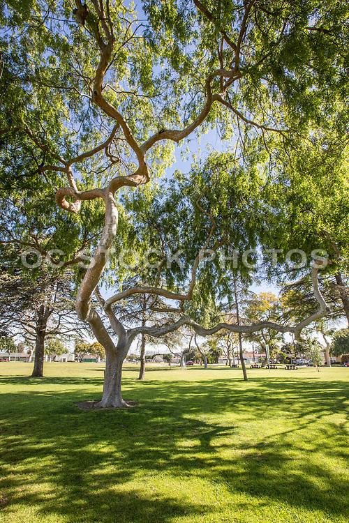 Apollo Park Downey California